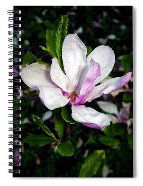 Pink Magnolia Blossom Spiral Notebook