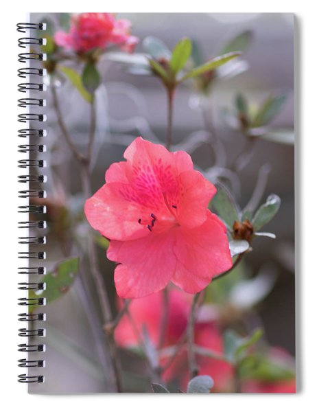 Pink Orange Flower Spiral Notebook
