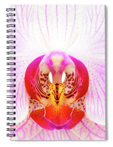 Pink Orchid Spiral Notebook by Dave Bowman