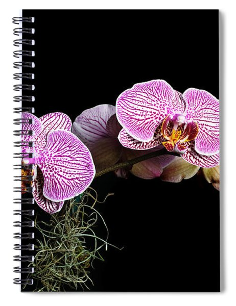 Pink Orchids Spiral Notebook