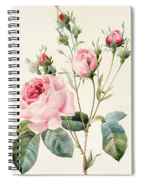 Pink Rose And Buds Spiral Notebook