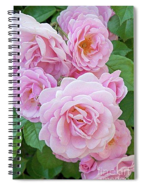 Pink Rose Cluster II Spiral Notebook