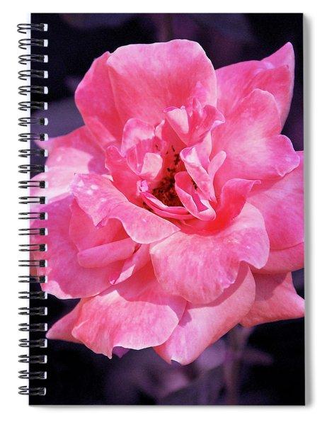 Pink Rose With Violet Spiral Notebook