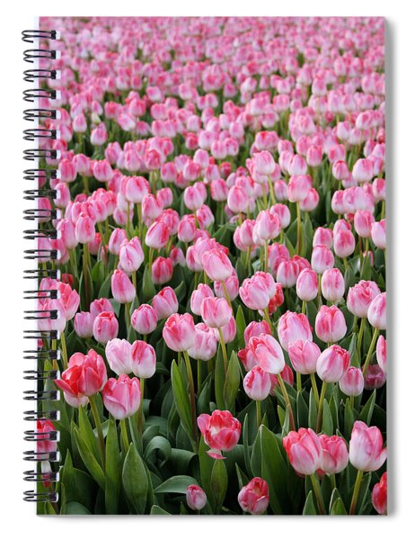 Pink Tulips- Photograph Spiral Notebook