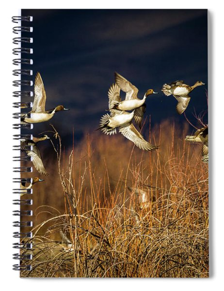 Pintails And Wigeons Spiral Notebook