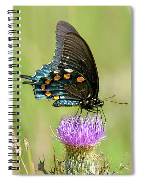 Pipevine Swallowtail Butterfly 2 Spiral Notebook