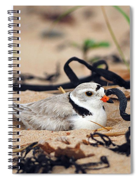 Piping Plover Spiral Notebook