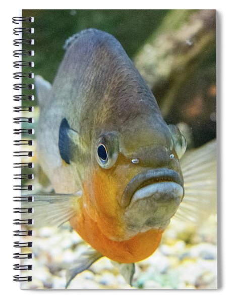 Piranha Behind Glass Spiral Notebook