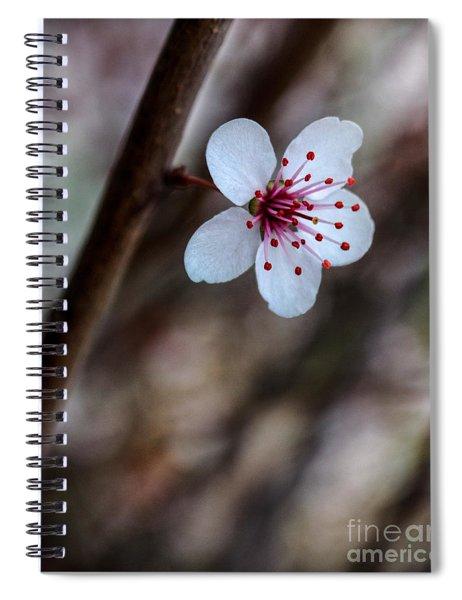 Plum Flower Spiral Notebook
