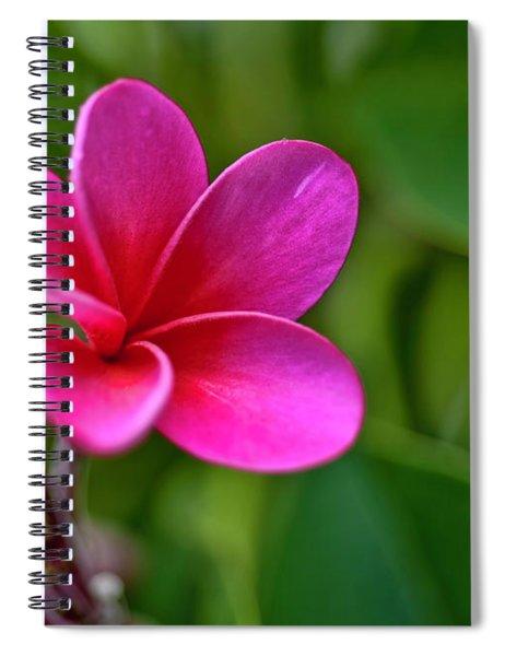 Plumeria - Royal Hawaiian Spiral Notebook