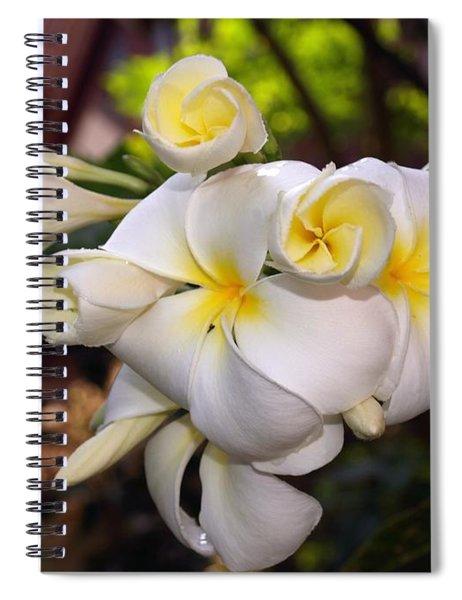 Plumeria Portrait Spiral Notebook