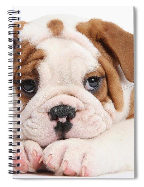 Po-faced Bulldog Spiral Notebook