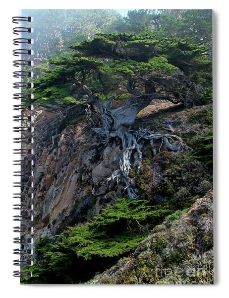 Point Lobos Veteran Cypress Tree Spiral Notebook