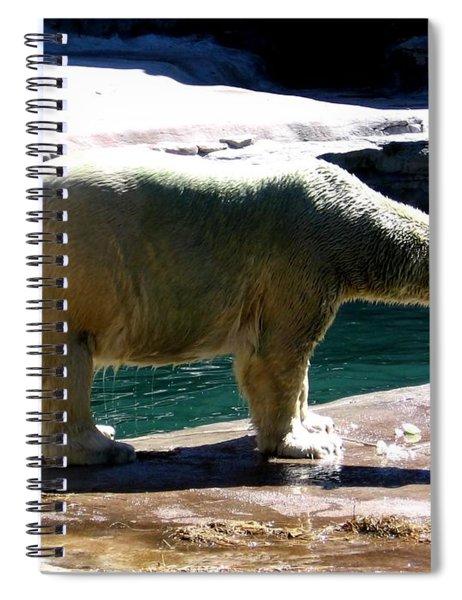 Polar Bear 3 Spiral Notebook