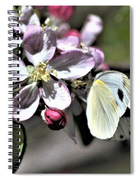 Pollinating The Apple Blossoms Spiral Notebook