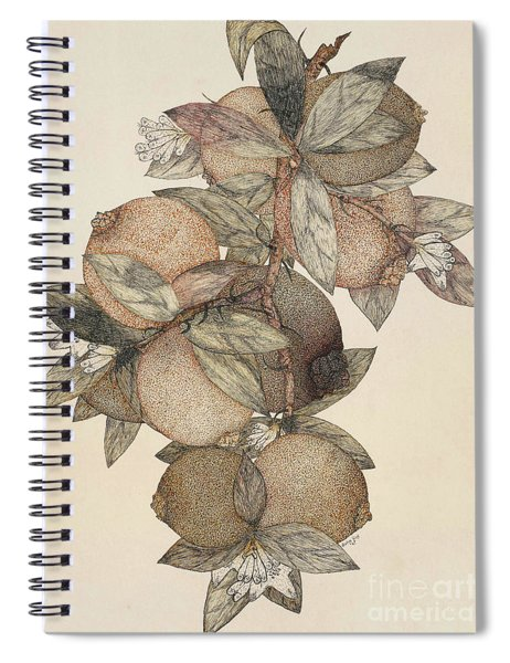 Pomegranate Fruit, 1867 Spiral Notebook