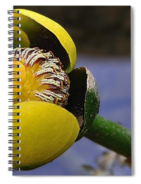 Pond Lily In Bloom Spiral Notebook