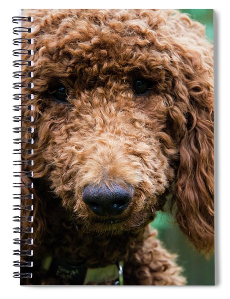 Poodle Pup Spiral Notebook