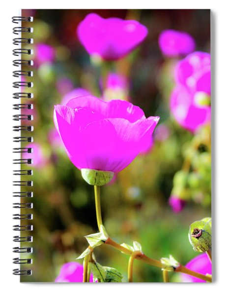 Spiral Notebook featuring the photograph Poppies by Alison Frank