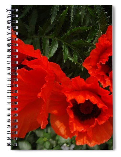 Poppies Allegro Spiral Notebook