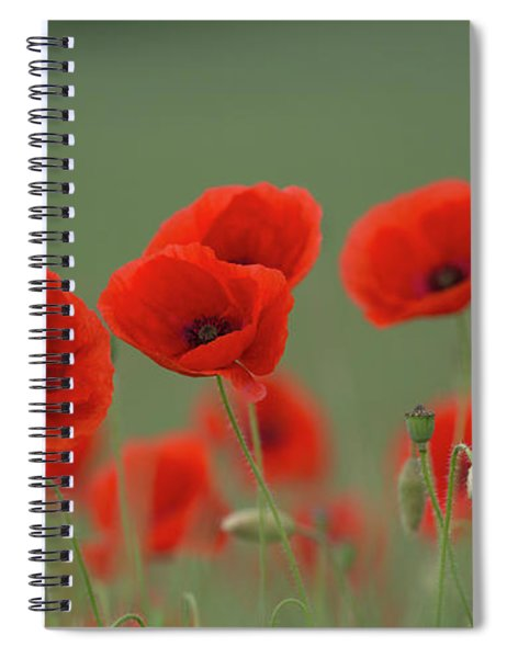 Poppies In A Meadow Spiral Notebook