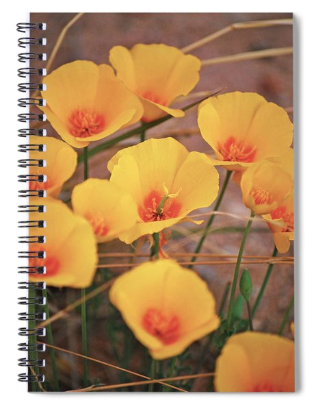 Poppies On Mount Lemmon Spiral Notebook