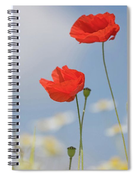 Poppies Reaching For The Skies Spiral Notebook
