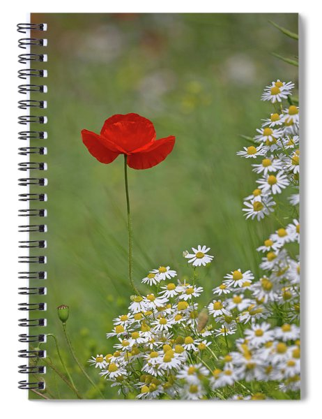 Poppy And The Daisies Spiral Notebook