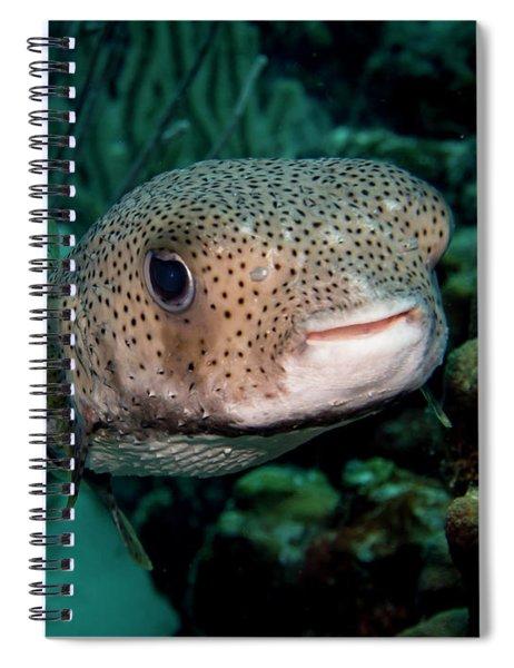 Porcupine Fish Spiral Notebook