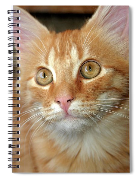 Portrait Of A Cat Spiral Notebook
