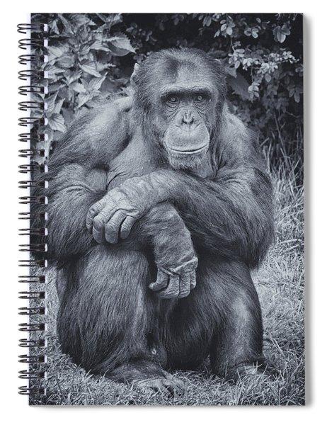 Portrait Of A Chimp Spiral Notebook