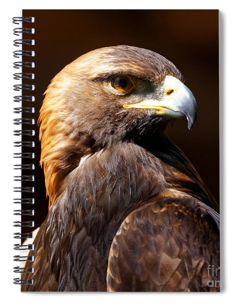 Portrait Of A Golden Eagle Spiral Notebook
