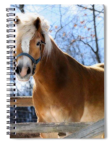 Portrait Of A Haflinger - Niko In Winter Spiral Notebook