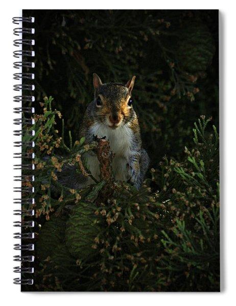 Portrait Of A Squirrel Spiral Notebook