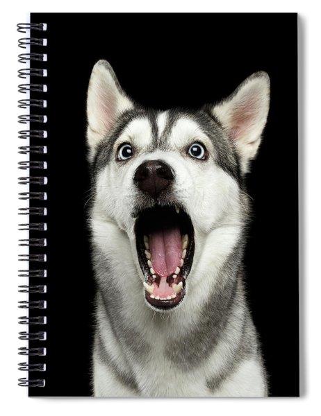 Portrait Of Amazement Siberian Husky Spiral Notebook