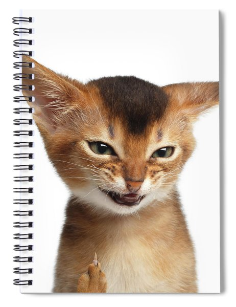 Portrait Of Kitten With Showing Middle Finger Spiral Notebook