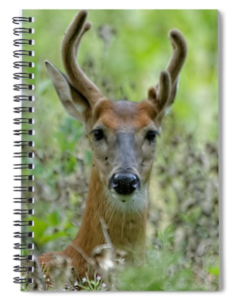 Portriat Of Male Deer Spiral Notebook