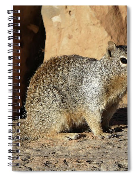 Posing Squirrel Spiral Notebook