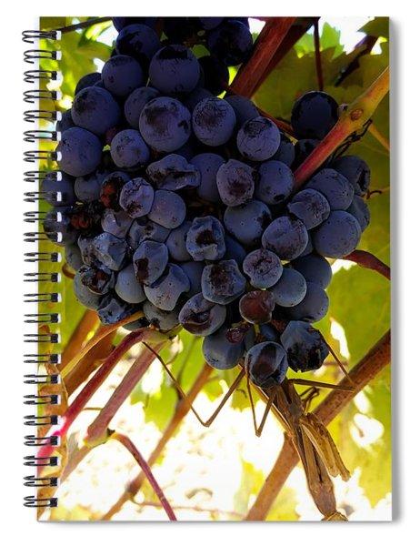 Praying Mantis - Tuscany Wine Region, Italy Spiral Notebook