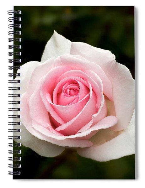 Pretty In Pink Rose Spiral Notebook