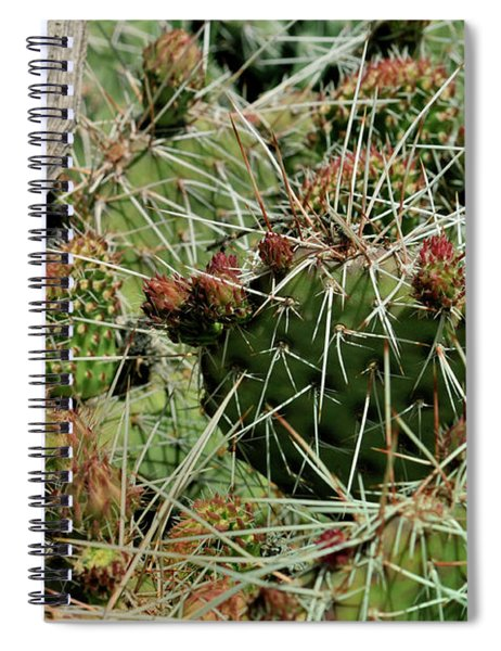 Prickly Pear Revival Spiral Notebook