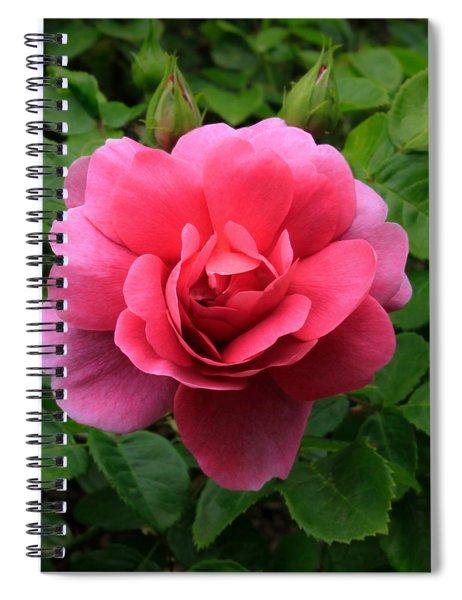 Princess Anne Rose Spiral Notebook