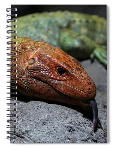 Professional Rock Taster Spiral Notebook
