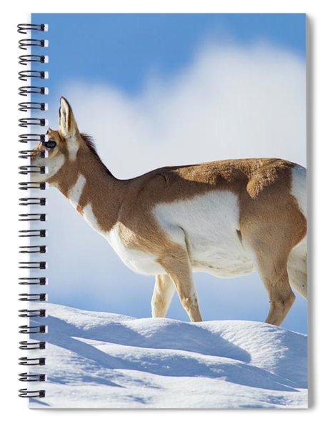 Pronghorn Doe On Snowy Ridge Spiral Notebook