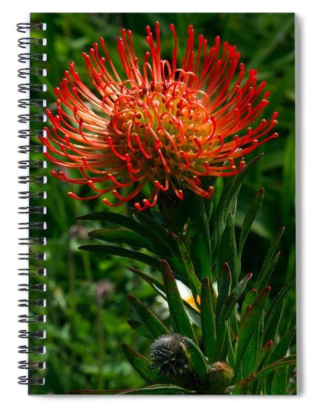 Protea Burst Spiral Notebook