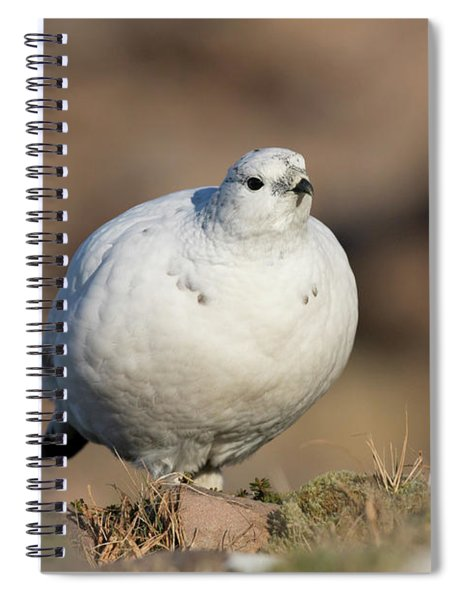 Ptarmigan Going For A Stroll Spiral Notebook