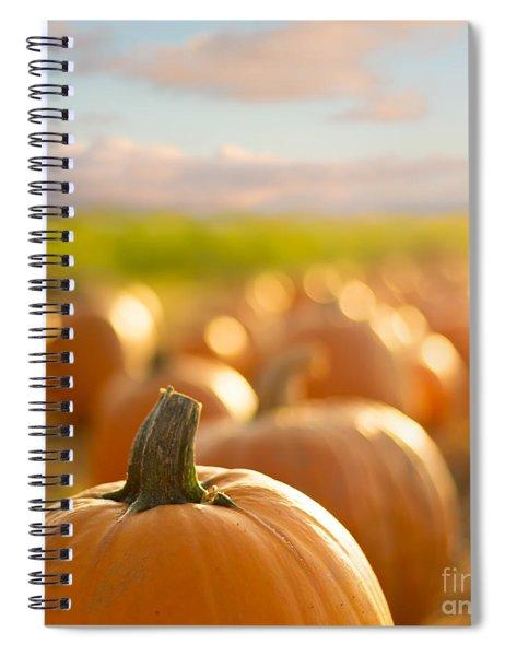 Pumpkin Patch Spiral Notebook