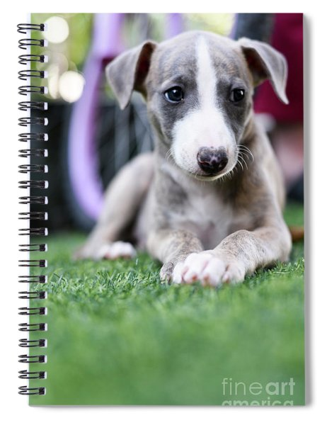 Whippet Puppy Spiral Notebook