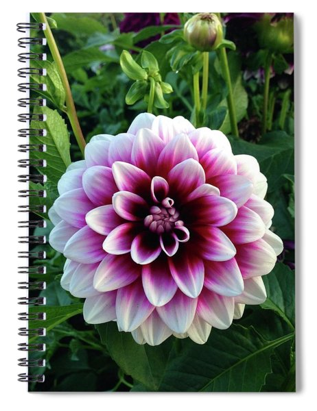 Purple And White Dahlia Spiral Notebook