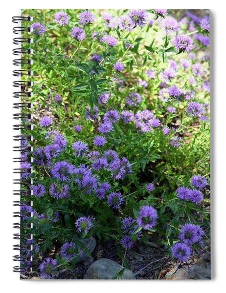 Purple Bachelor Button Flower Spiral Notebook